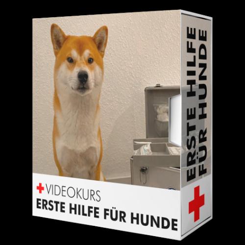 Erste Hilfe Kurs für Hunde