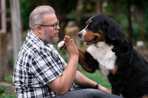 Karottensuppe Durchfall Hund