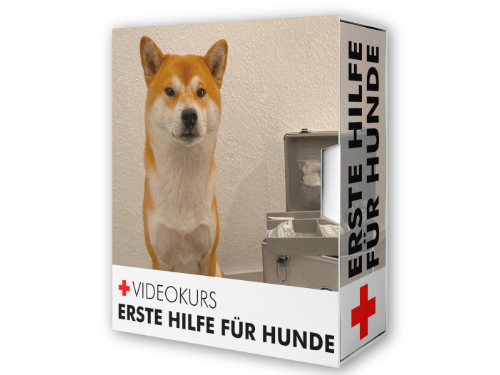 Erste Hilfe für Hunde