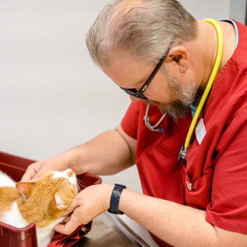 Tiergesundheit Coach Beratung Tiere
